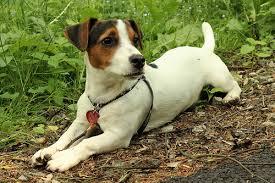 hondenverzekering